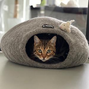blog beyoona catcave honden en kattenzooi