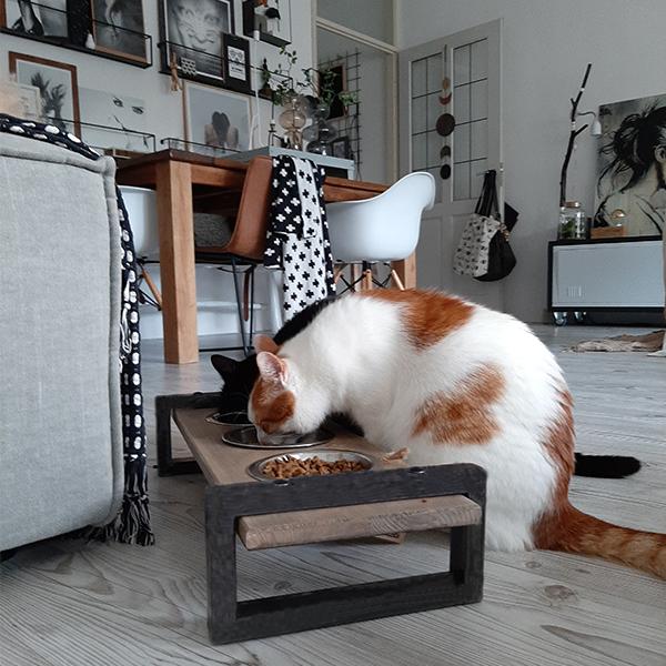 stoere industriele voerbak voor meerdere katten honden en kattenzooi