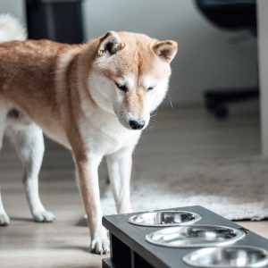 darkgrey houten hondenvoerbak wood 3.0 honden en kattenzooi