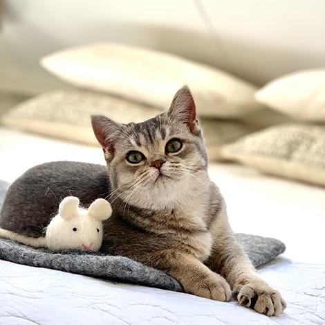 fairtrade catmat stone honden en kattenzooi