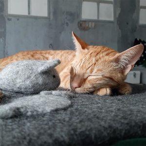 fairtrade wollen kattenmat honden en kattenzooi