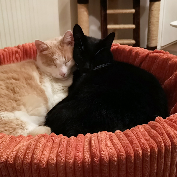 mand orange city honden en kattenzooi