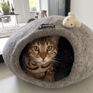 catcave fairtrade grijs island honden en kattenzooi