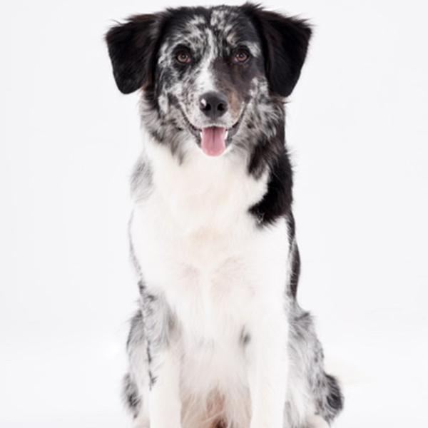Waar koop je een hond?